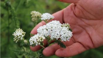 フランシラ マインドケア フラワーエッセンス あなたを癒してくれる花はどれですか?